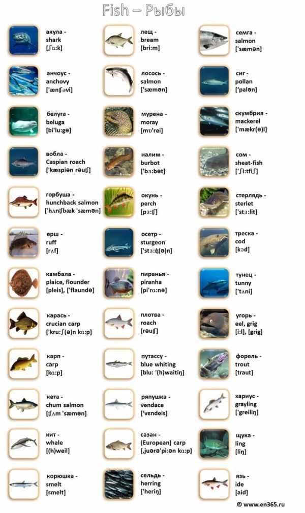 Рыбы, названия рыб на английском языке в картинках с ...