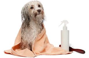 Kangen Water for grooming