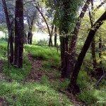 Bosque de Olmos