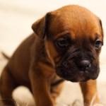 educa al perro a hacer sus necesidades