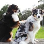socialización del perro