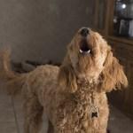 educar a un perro ladrador