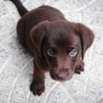 educación de un cachorro
