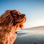 adquirir un perro