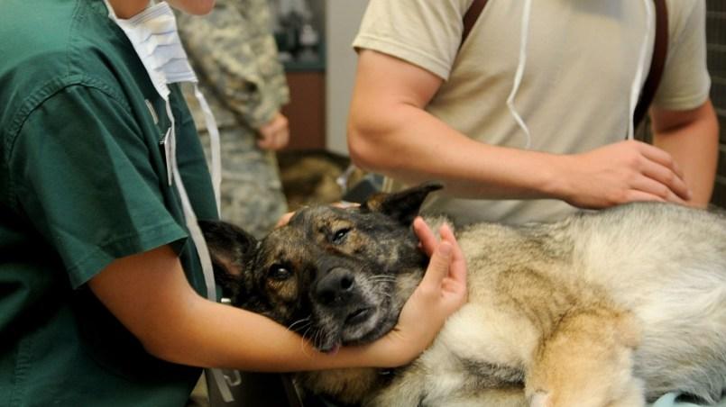 primeros auxilios en perros
