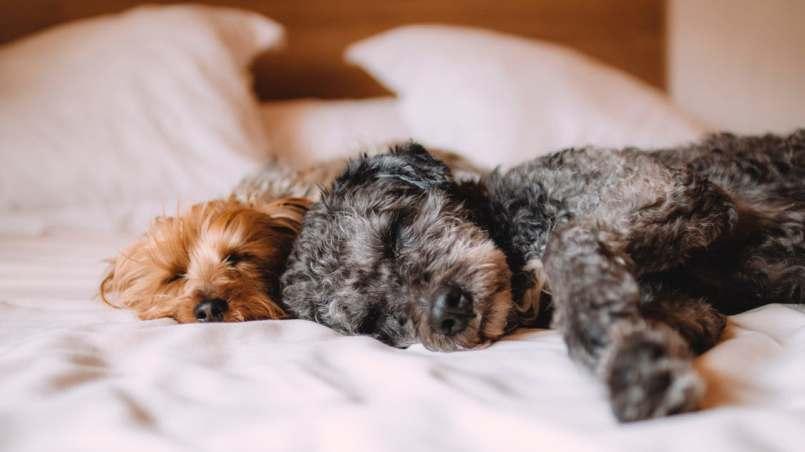 casa limpia con perro