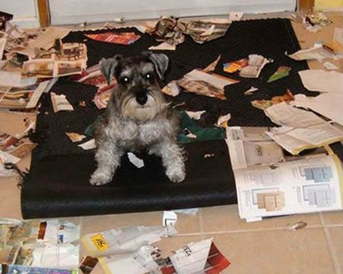 perro destructor