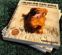 Cómo elegir el perro perfecto