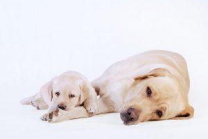 cachorro y madre