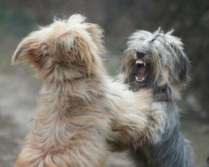perro ataca a otros perros