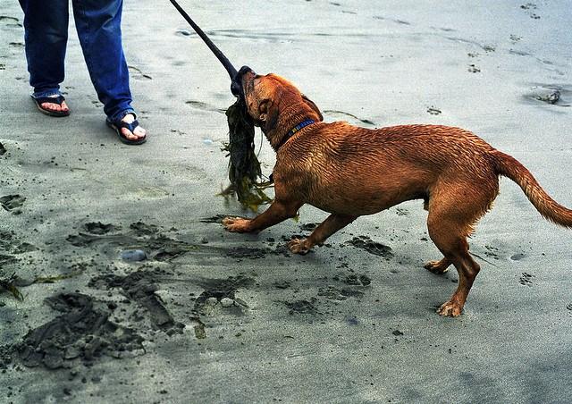 perros y algas