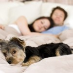 cómo enseñar a un perro
