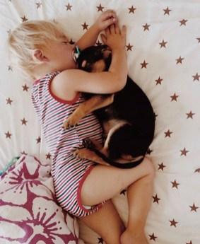vínculo entre cachorros