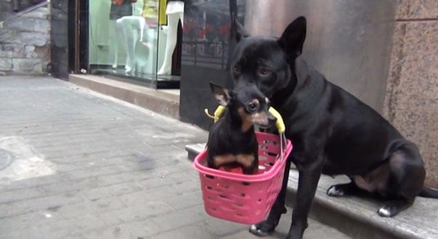 perro amor infinito