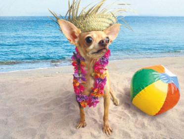 planes para el verano con el perro