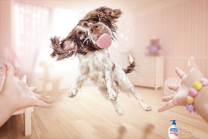 perros y anuncios