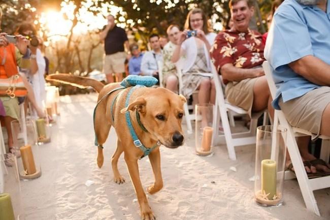 perros en la boda