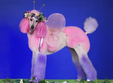 polémico concurso de perros