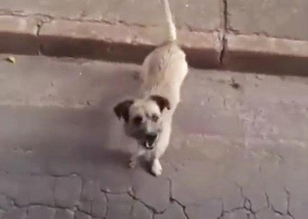 perro tras ambulancia