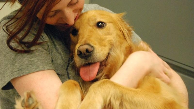 adiestramiento perros