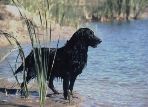 perros acuáticos