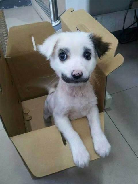 perros con pelaje espectacular