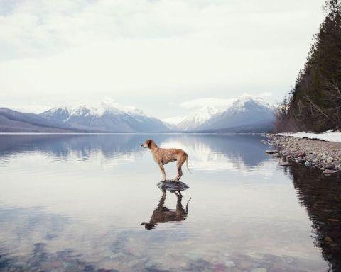 fotógrafo viaja con su perro