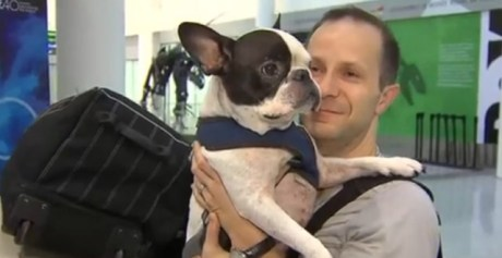 perro salva la vida gracias a un piloto de avión