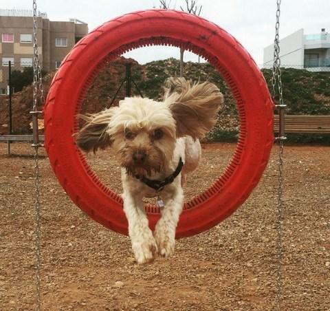 adiestramiento canino
