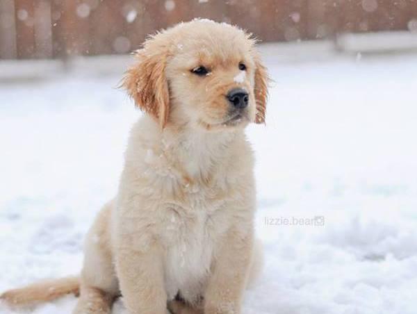 mitos perros e invierno