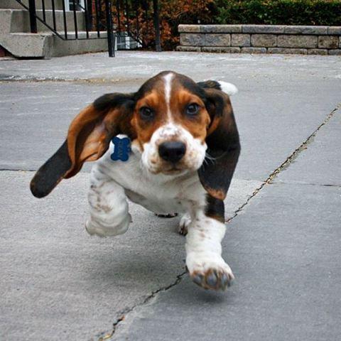 educar a un perro a acudir a la llamada