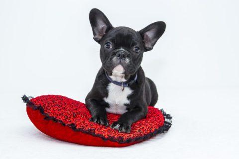 descuentos en productos caninos