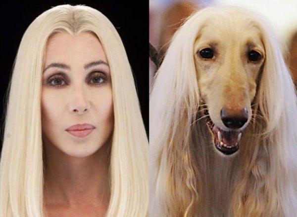 famosos que se parecen a perros