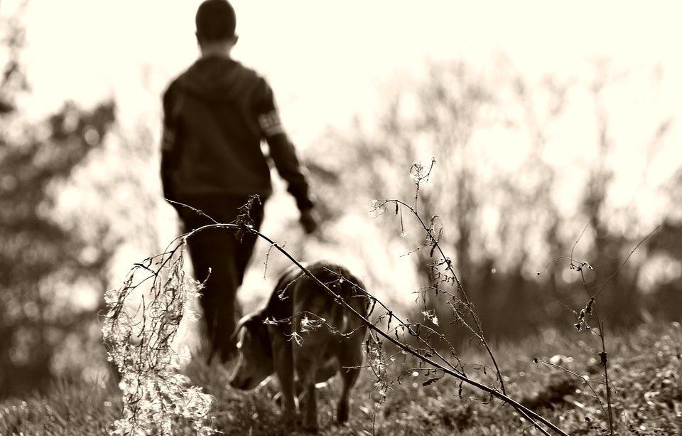 cómo nos benefician los animales