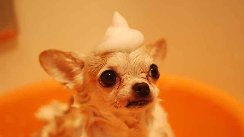 peluquerías caninas