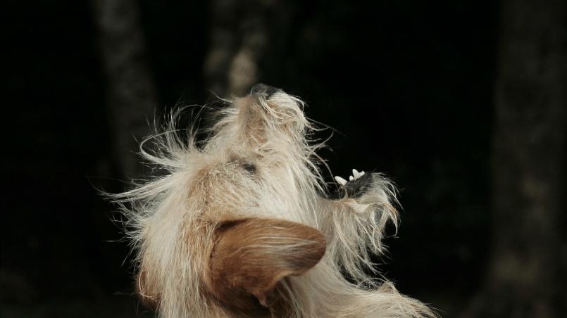 perro con ansiedad por comer