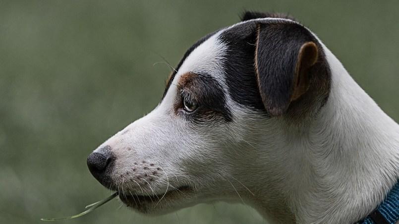 gasto anual de un perro