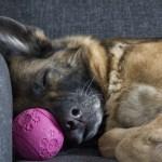 cuidar a los perros