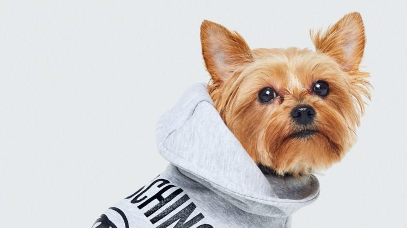 H&M lanza una colección de ropa para perros