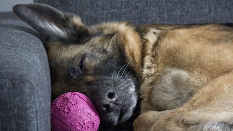 descanso del perro