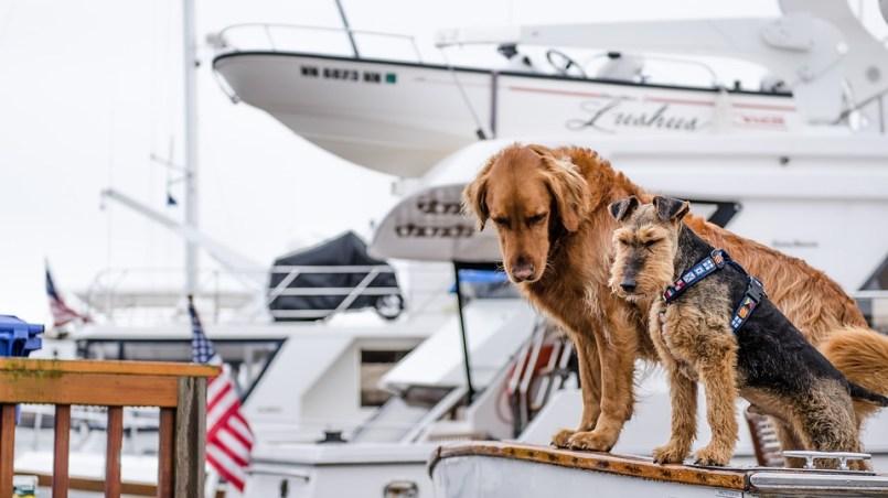 viajar con perro en barco
