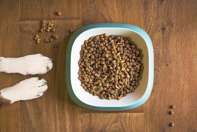gluten en perros