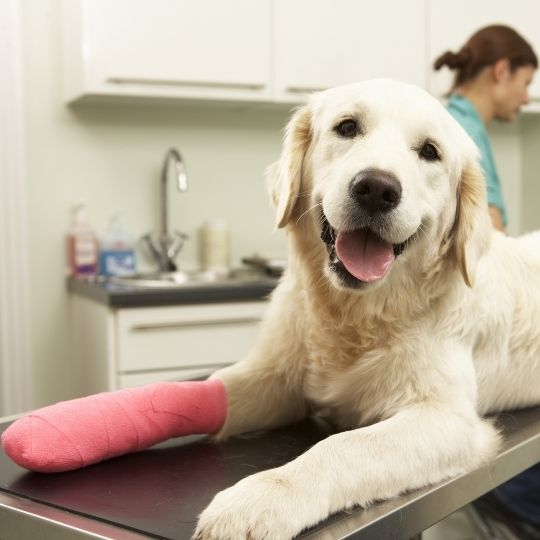 llevar de urgencia a tu perro al veterinario