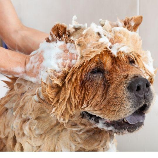 cuidados del perro