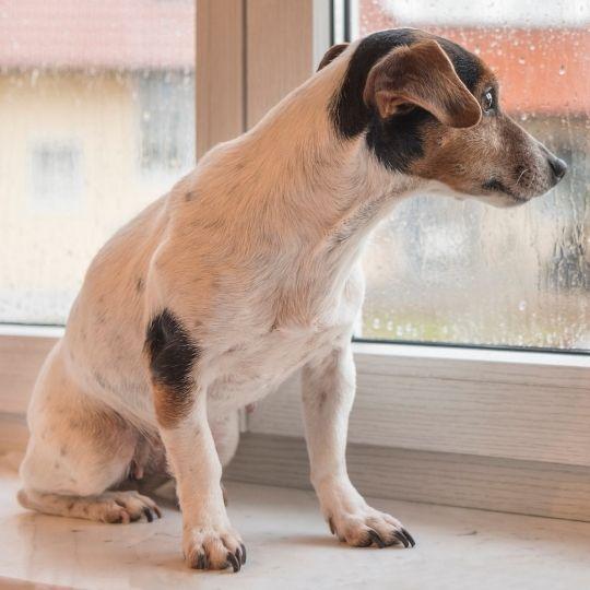 cómo calmar a un perro durante una tormenta