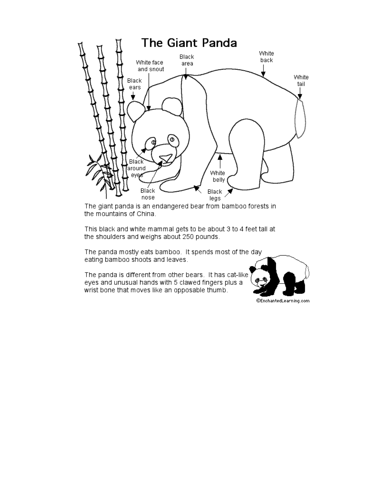 Panda Bear Worksheet For Kindergarten