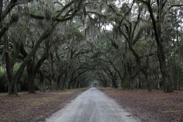 Wormsloe Plantation From The Last Song