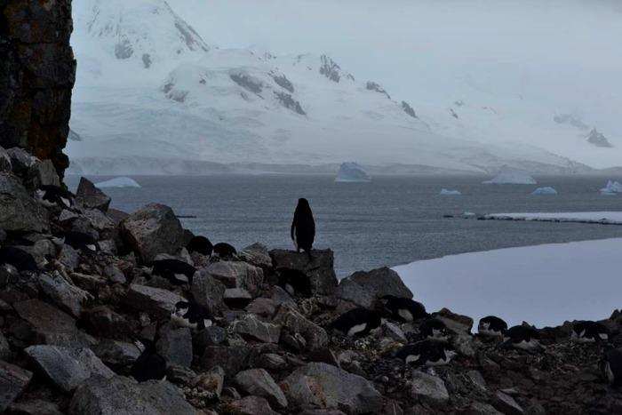 Penguin & Icebergs In Antarctica