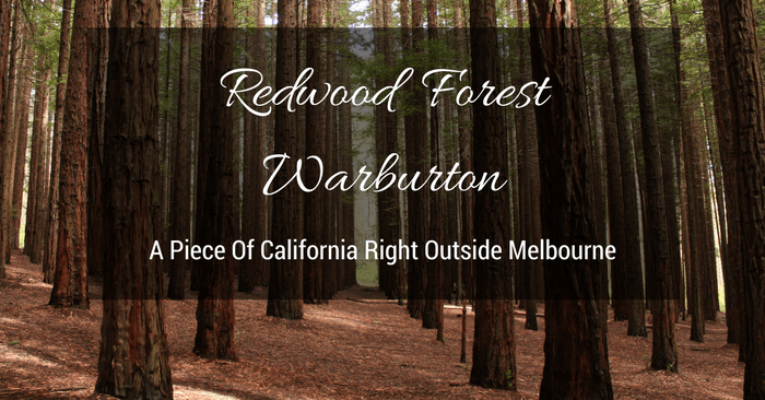 Visiting Warburton's Redwood Forest