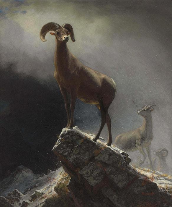 Rocky Mountain Sheep by Albert Bierstadt